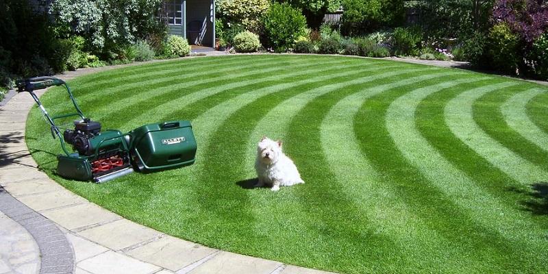 Jak tworzyć pasy na trawniku?