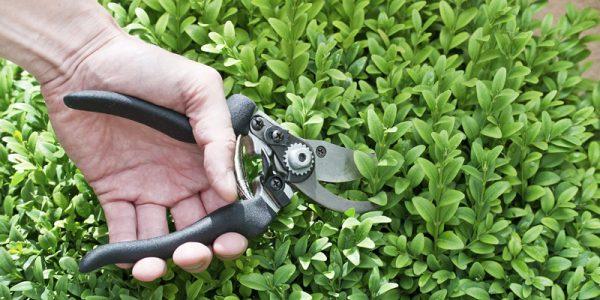 najlepsze narzędzia do przycinania