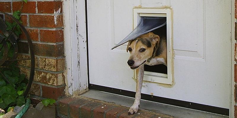 Jak wykonać w drzwiach przejście dla czworonoga?