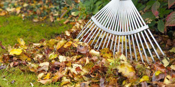 jakie prace należy wykonać w ogrodzie jesienią